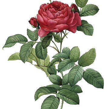 Victorian Scrapbook: Vintage Rose by carrieclarke