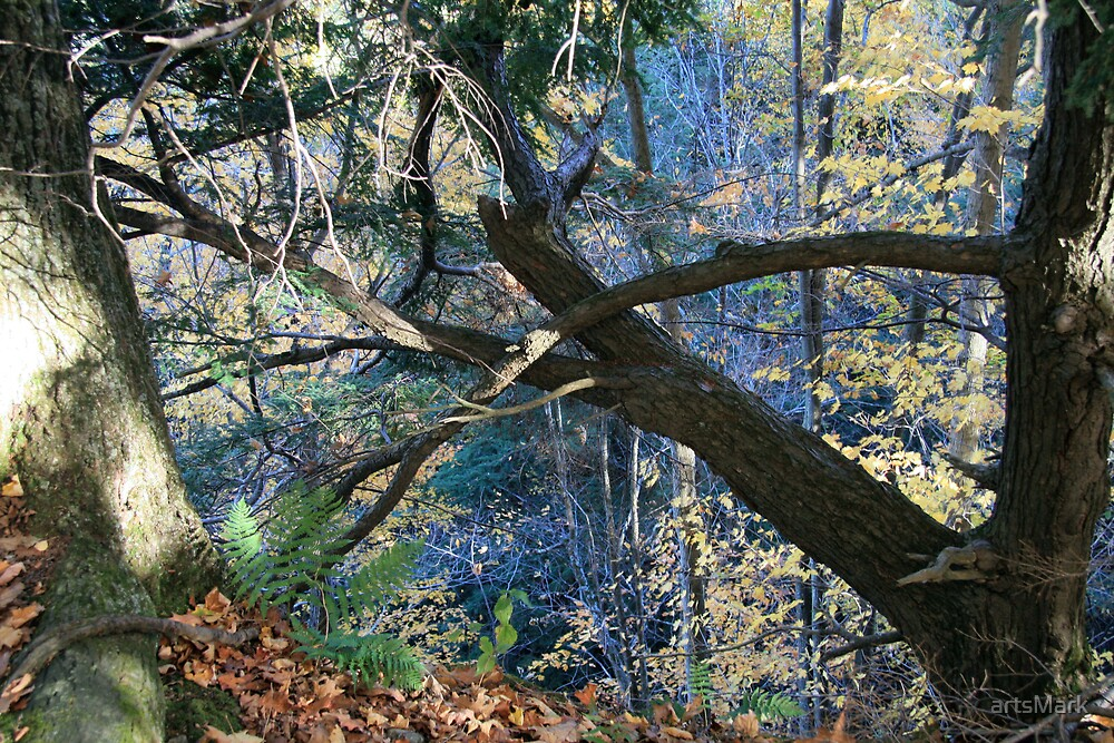 Forest edge by artsMark