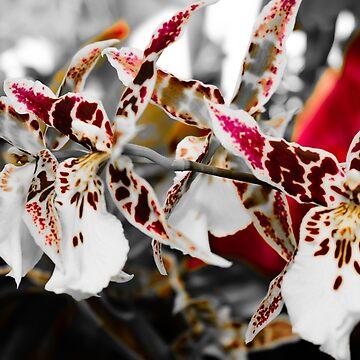 dark orchids by Unwritten