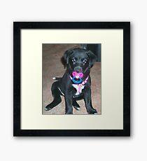 Binky Baby Framed Print
