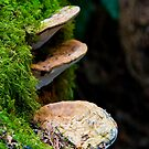 Mushrooms and Moss by Patrick Beggan