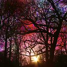 Winter Colors by Sonja Svete