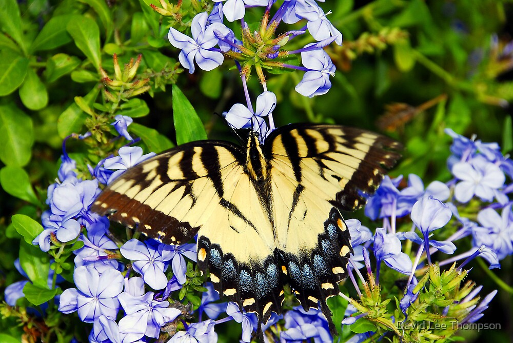 """""""Yellow Wings"""" by David Lee Thompson"""