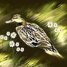 wild duck with daisys  by little1sandra