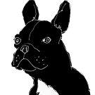 french bulldog by Matt Mawson