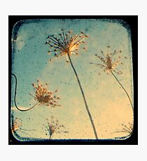 Reach for the Sky - Through The Viewfinder (TTV) Photographic Print