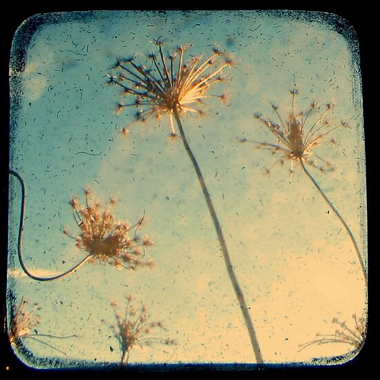 Reach for the Sky - Through The Viewfinder (TTV) by Kitsmumma