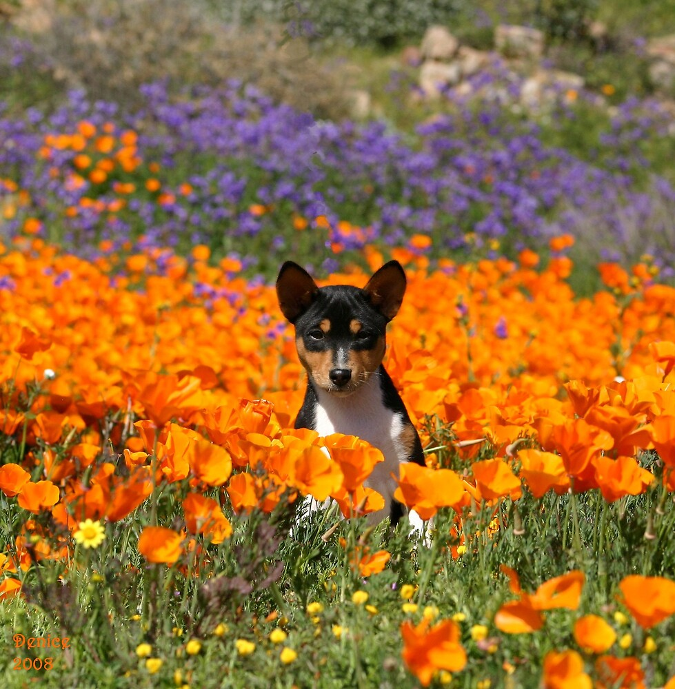 Basenji Pup in Poppies by Ladyluxor