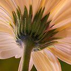 0620 Pastel petals by Hans Kawitzki