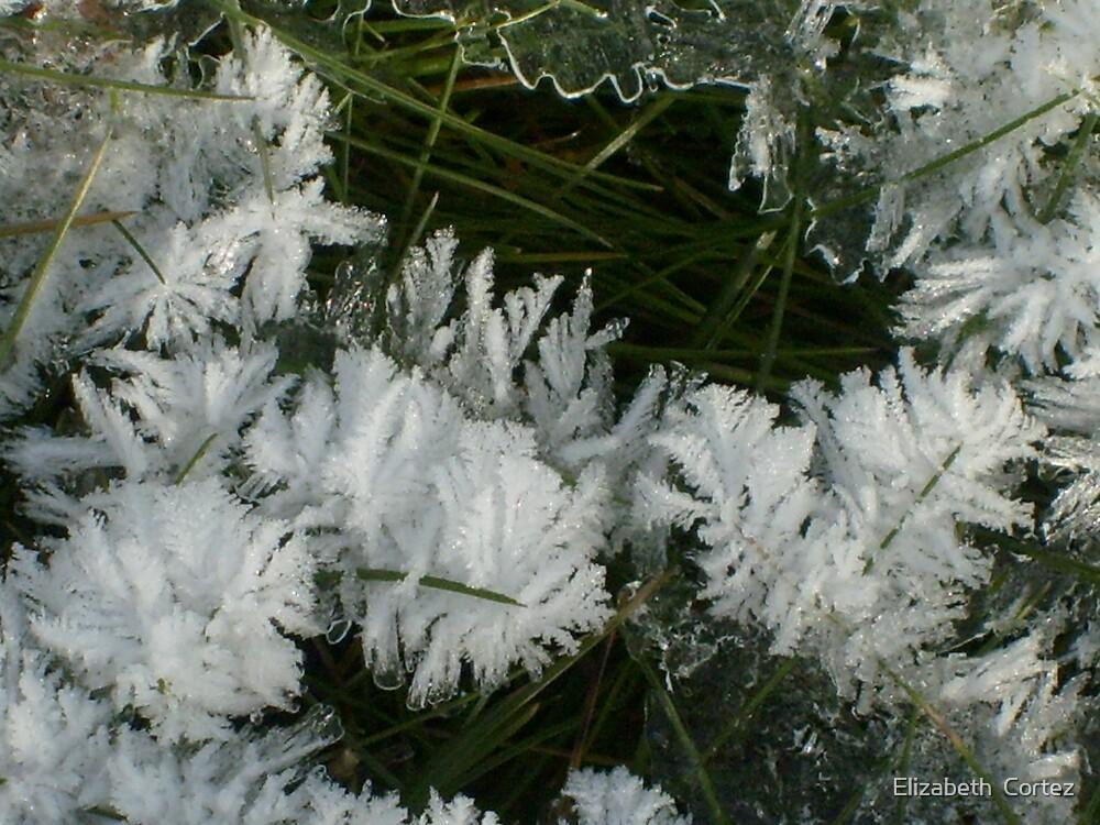 Frosting by Elizabeth  Cortez