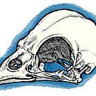 Sparrow Skull by topquark