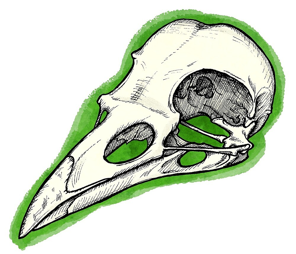 Rook Skull by topquark