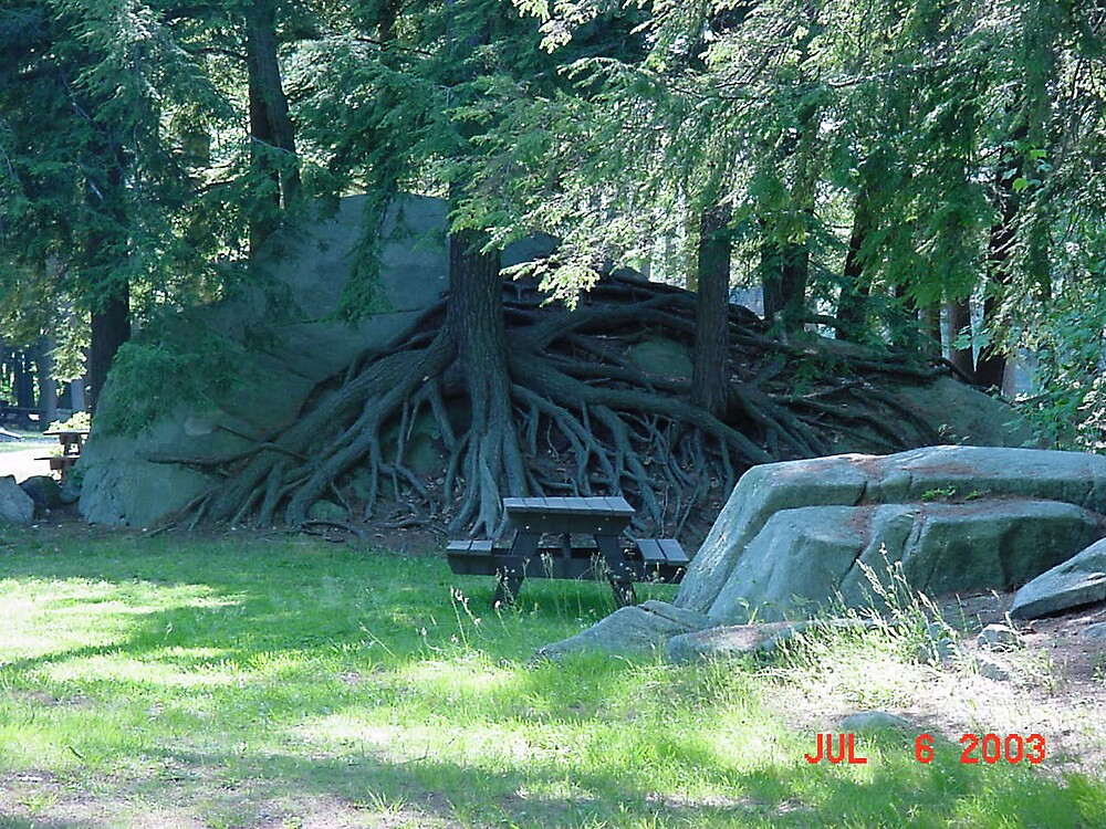 Look at those roots by Burritt2002