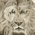 LION by picketty