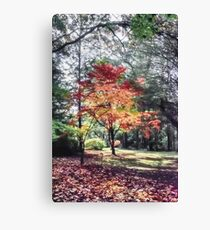 Colours of Mount Wilson (10) Canvas Print