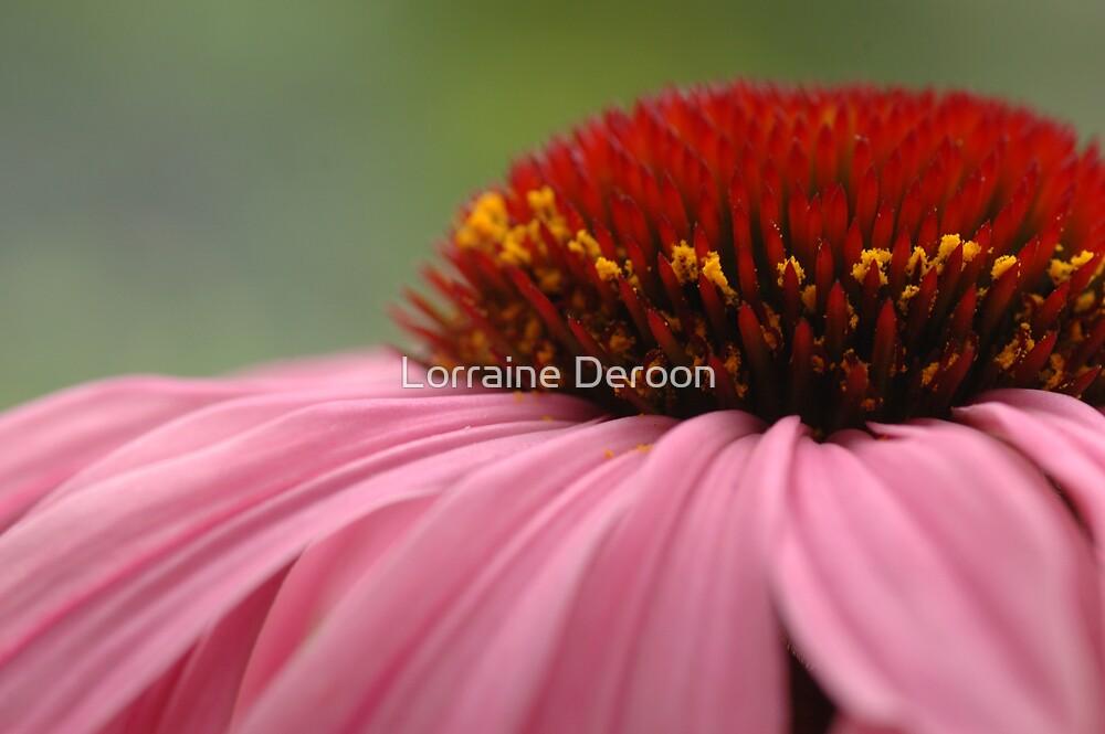Purple Cone Flower by Lorraine Deroon