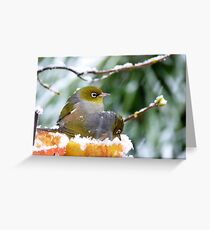 She's Sitting In An Apple!! Silver-Eyes - NZ Greeting Card
