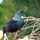 Bring It On.... - Tui - NZ by AndreaEL