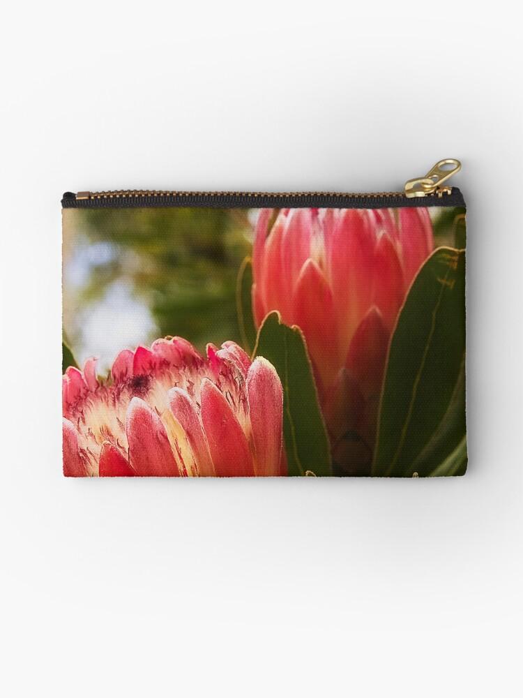 1059 Protea - Flower by Hans Kawitzki