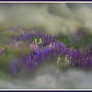 The Lupine Cloud by Wayne King