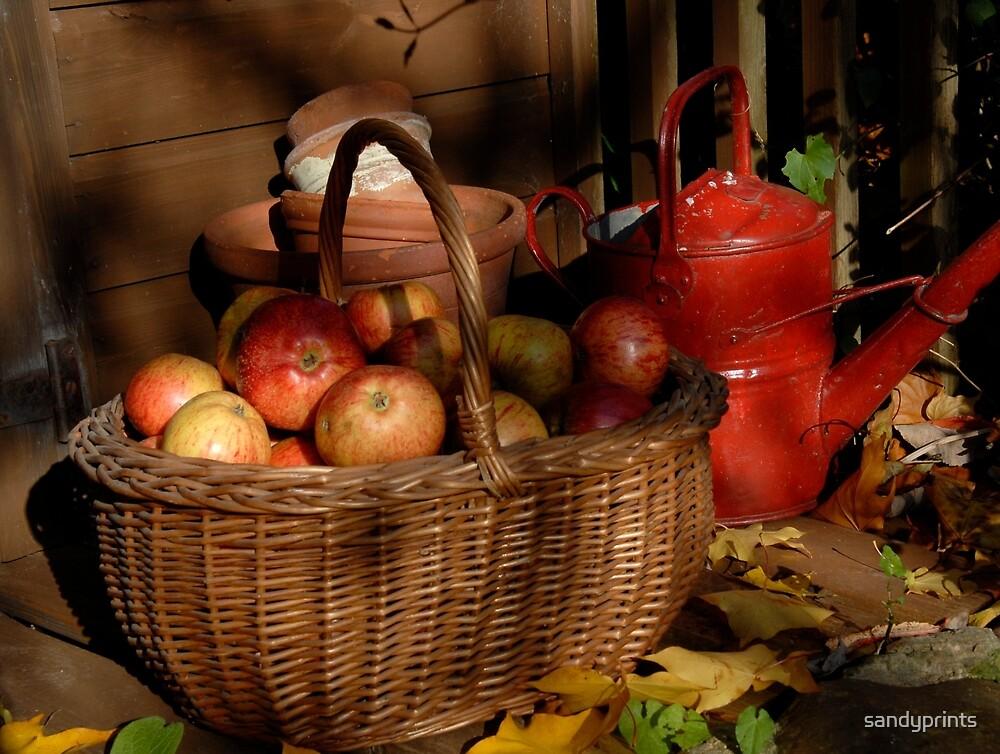 Autumn fruits. by sandyprints