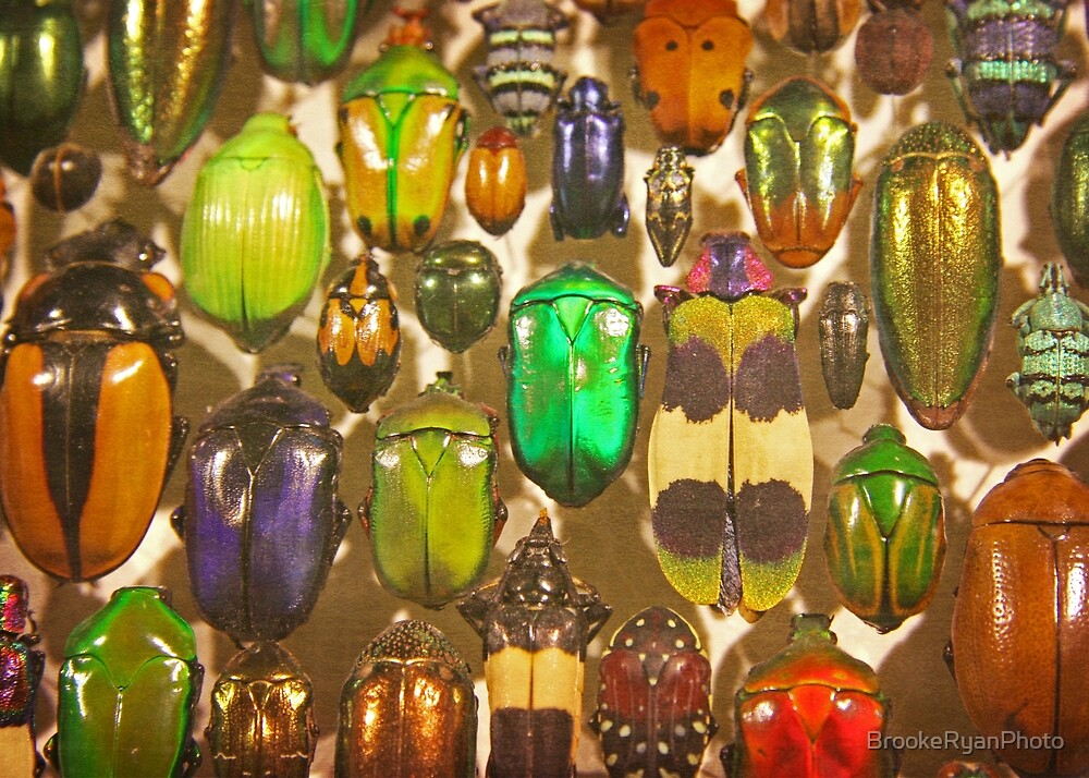 Insects, Beetles, and Bugs by BrookeRyanPhoto
