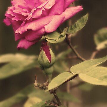 Rustic Rose by soph