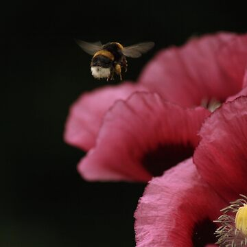 Busy Bee by soph