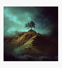 Einsamer Baum Fotodruck