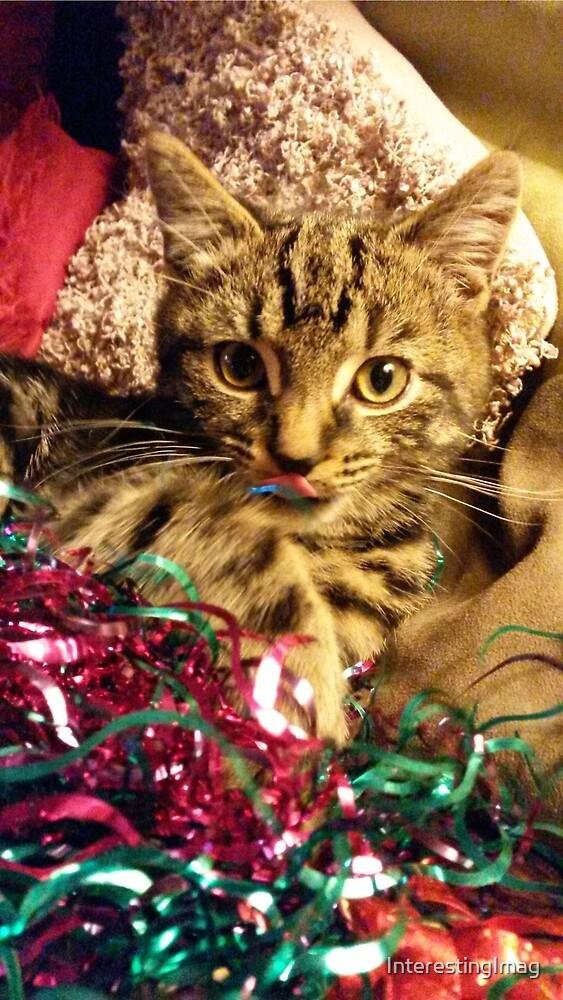 Christmas Kitty by InterestingImag