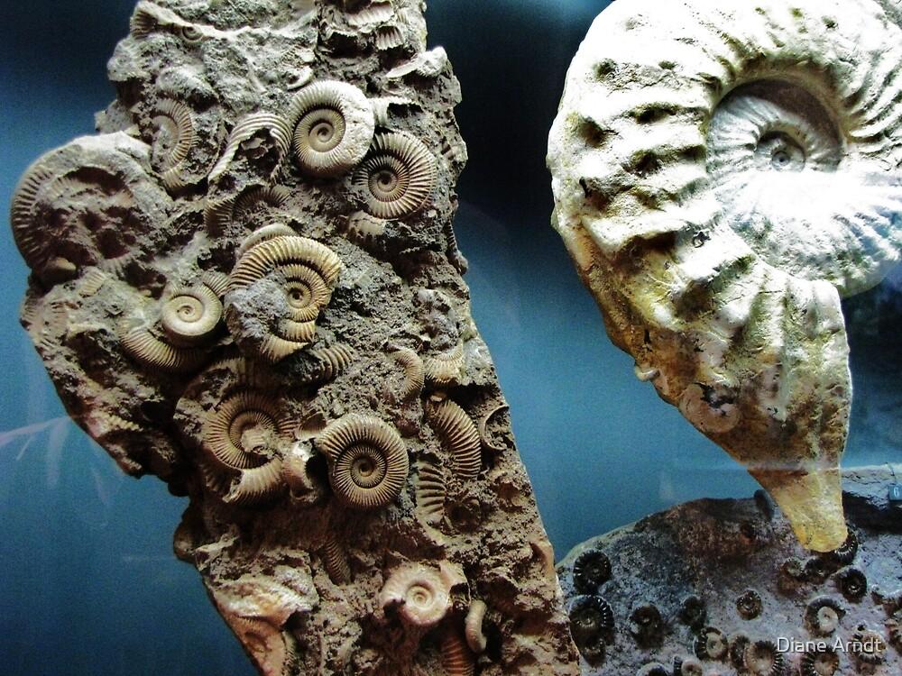 Fossilized Seashells by Diane Arndt