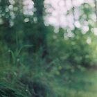 «Nos tumbamos en la hierba» de Marina Demidova