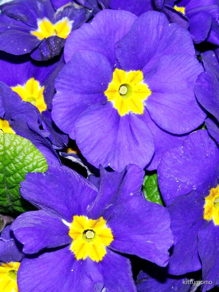 Purple flowers by kittymomo