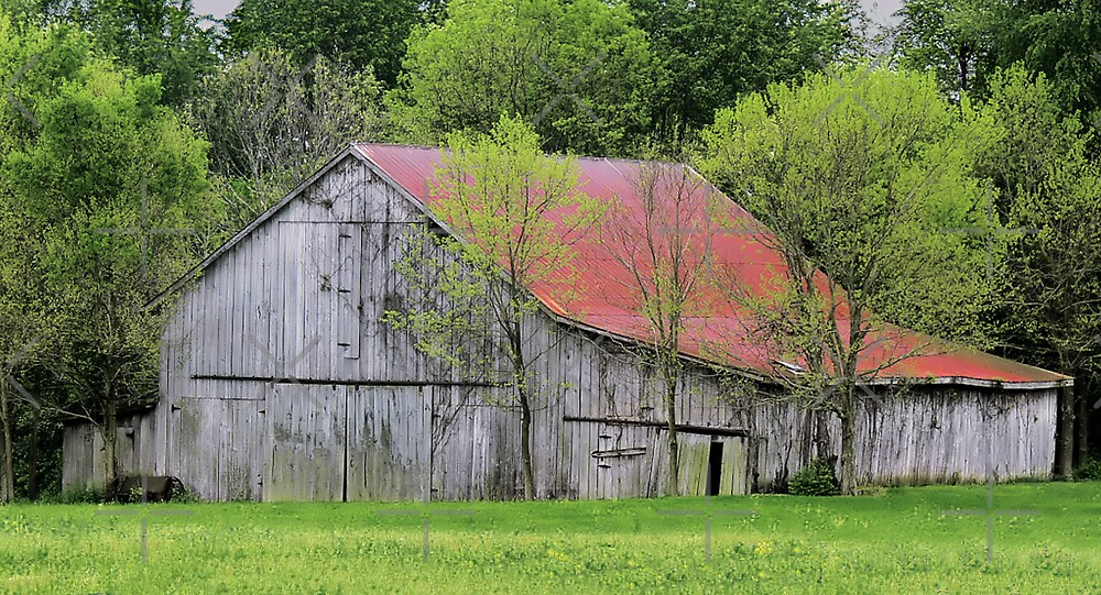 Kentucky Barn by Rachel Leigh