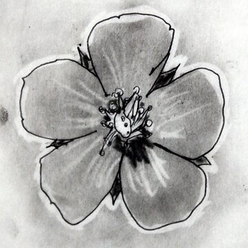 Artisan Flower Sketch Print 4 by rebeccagalardo