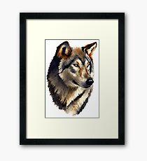 Wild Golden Wolf Framed Print