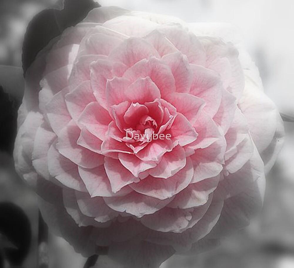 Red Chrysanthemum by Davybee