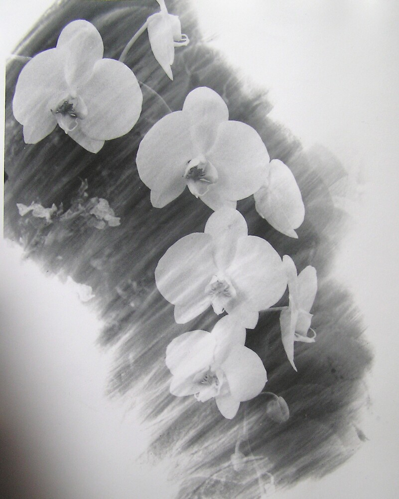 Romantic Orchid by kateilles