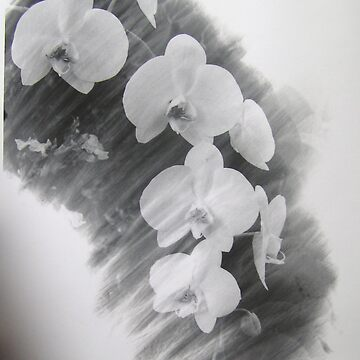 Romantic Orchid by kateilles