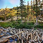 Dream Lake Colorado by ArtOLena