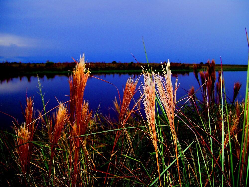 Los Llanos by Glenn Browning