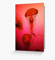 Portrait of a Jellyfish- Pink Greeting Card