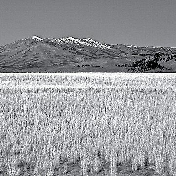 Idaho Scenic Pastures by Brynes