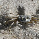 I'm crabby, so WHAT? by Patricia Montgomery