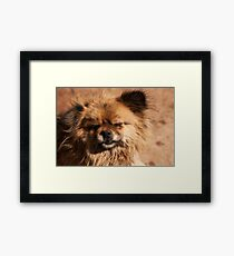 Little dog with closed teared eyes and black nose. Framed Print