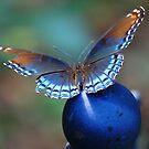 Blue by Grinch/R. Pross