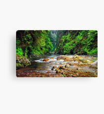 Green Charming Wildlife Place Canvas Print