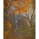 Autumn in Bavaria - path in the wood with golden leaves by gameover