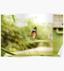 Yellow orange colorful butterfly sitting on green leaf. Poster