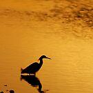 Snowy Egret Silhouette by Jonicool